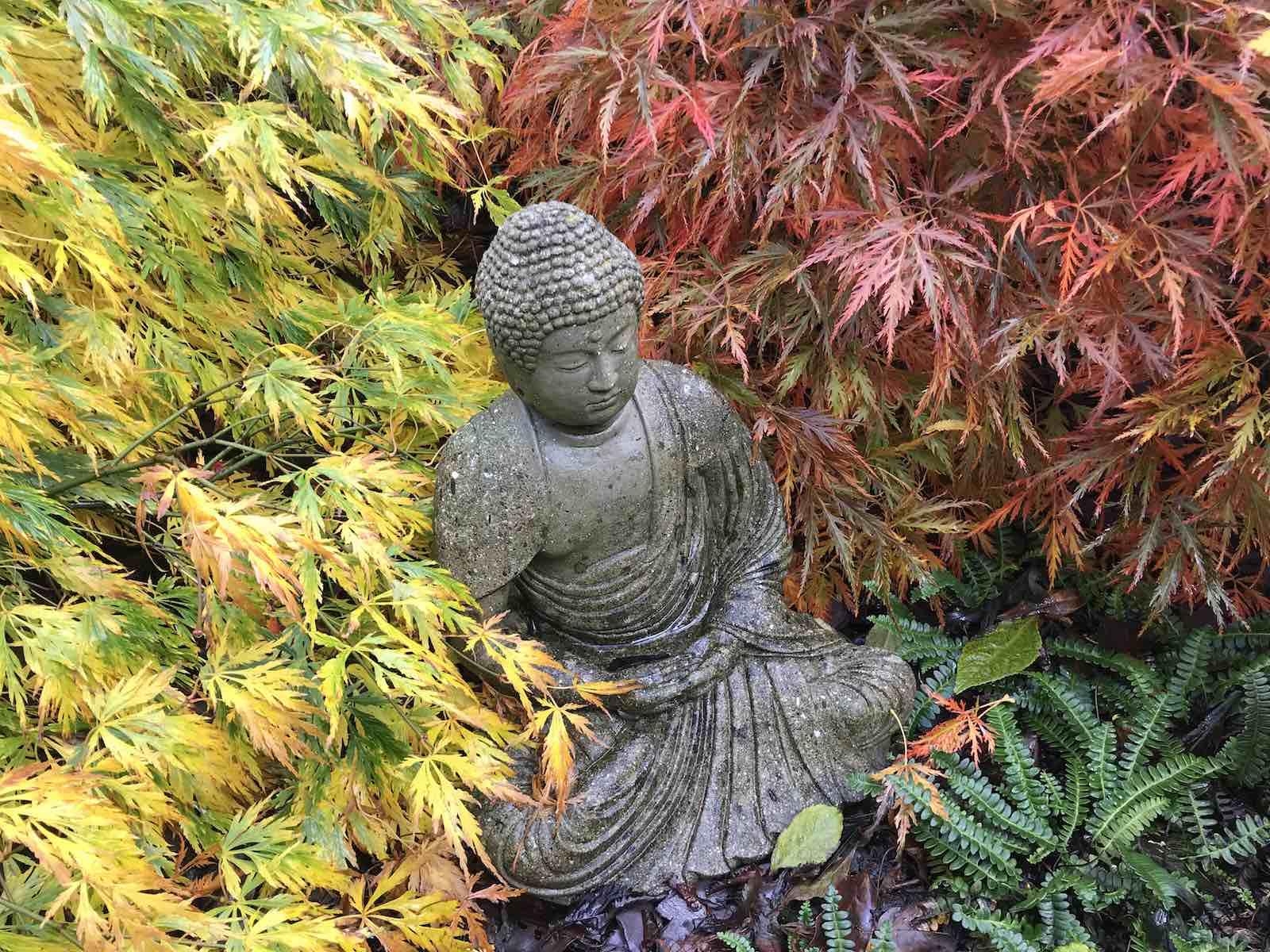 Acers autumn colours-01.jpg