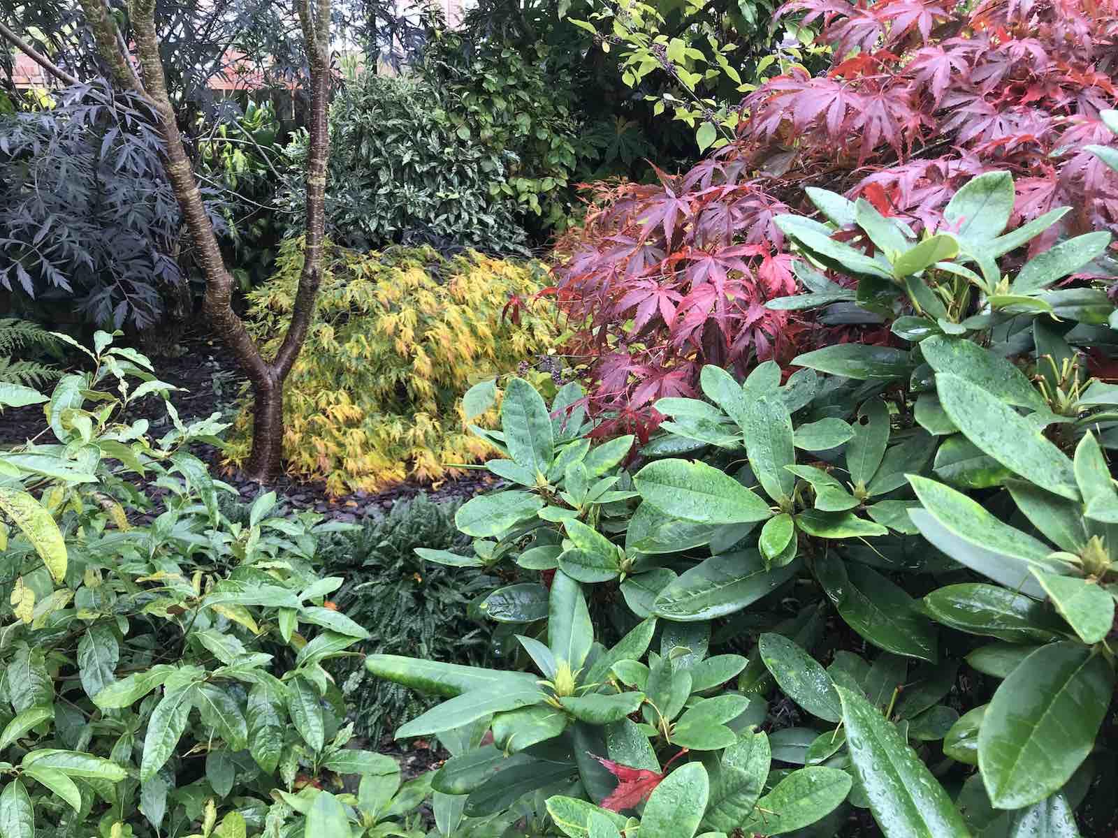 Acers autumn colours-06.jpg