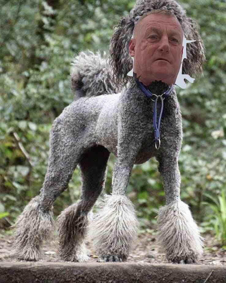 Wull dog.jpg